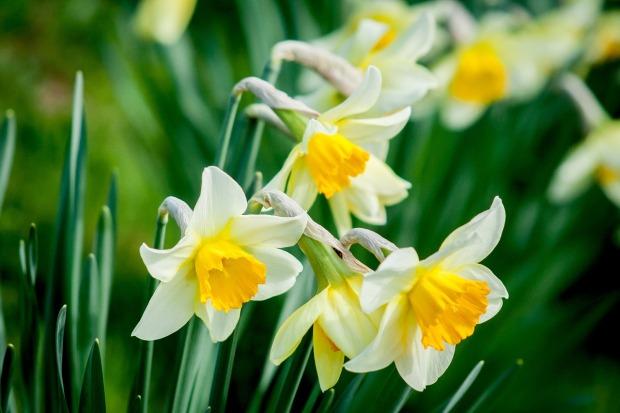 flower-1446420_1280